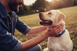 Man with dog rescue dog animal