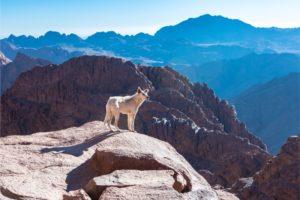 Can Pets Get Altitude Sickness?