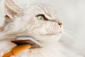 Healthy and Clean: Why Home Cat Grooming is so Important