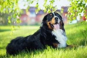 Understanding TPLO Surgery In Dogs