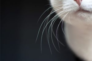 Avoiding Whisker Fatigue in Cats