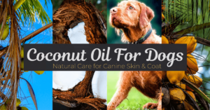 Coconut Oil For Dogs Benefit